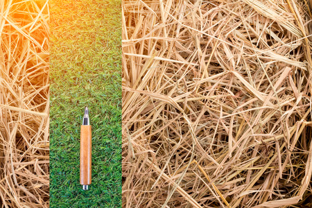 dry grass: sharp pencil on green grassand dry grass  texture background with copy-space.jpg Stock Photo