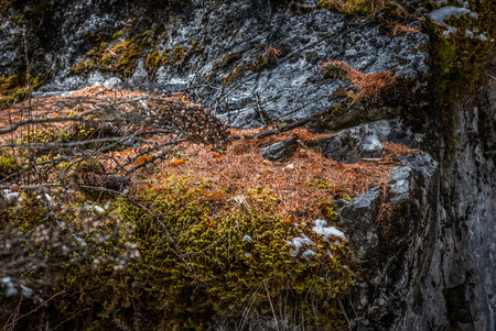 allegheny: Moss on stone wall in autumn at yading reserve nature china