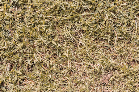 grass plot: field of dry yellow grass texture as a background, top view, horizontal Stock Photo