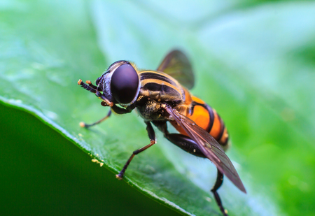malady: Fly on Green leaf