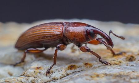 scarab: Scarab on stone background
