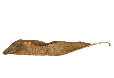 hoja seca en el fondo blanco Foto de archivo