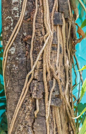 bark carving: Roots on a tree trunk. Stock Photo