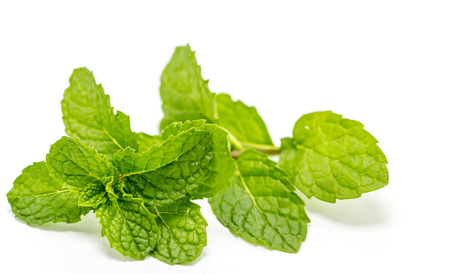 Green peppermint leaf isolated on white background Stock Photo