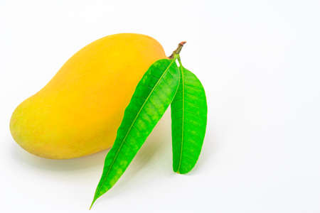 Ripe mango with green leaf on white background.