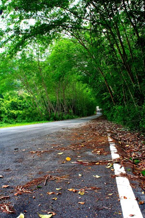 Road covered by green trees that make it look like a natural tunel Stock Photo - 6948329