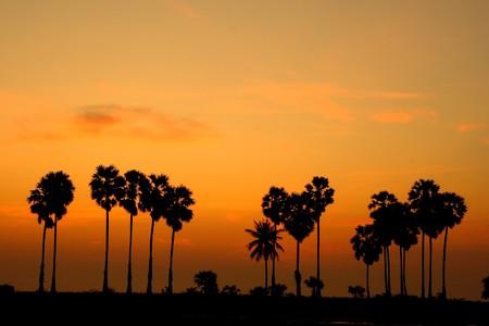 sky line: the yellow sky line and palm tree shadow,Cha-am beach Thailand Stock Photo