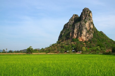 This picture contain green rice field and the big mountain. Green field available in Thailand  photo