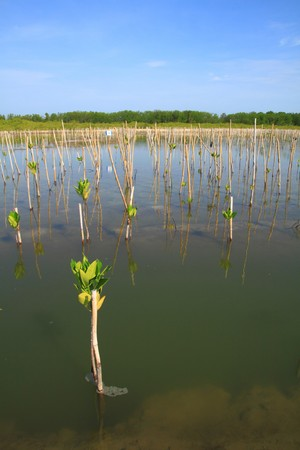 Young trees planting in water near the beach, its will be wooden. photo