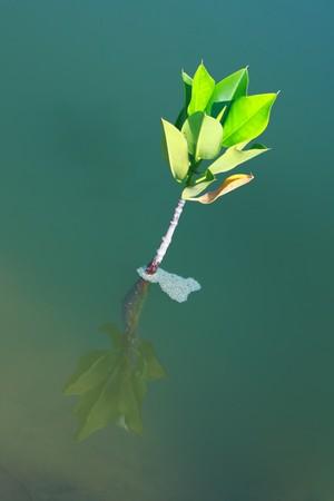 arbol de problemas: �rbol joven creciendo en soluci�n de agua para el problema global de antiparasitario
