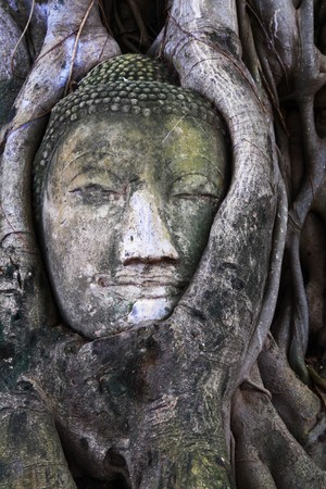 stone budda head in the tree roots, Ayutthaya is old capital of Thailand ,Ayutthaya is world heritage park in Thailand. photo