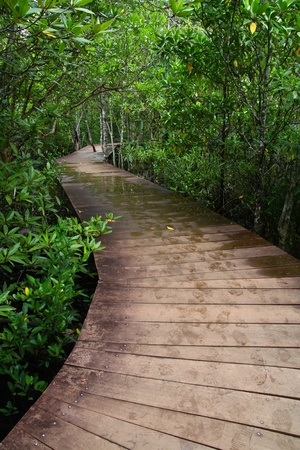 Wooden boardwalk through forest Krabee, Thailand . Stock Photo