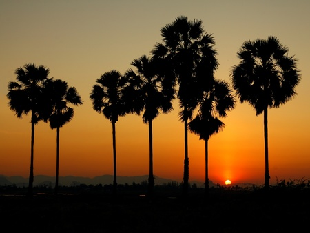 palm tree and sunset background photo