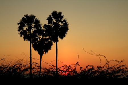 heart shape palm tree with sunset background Stock Photo - 11542065