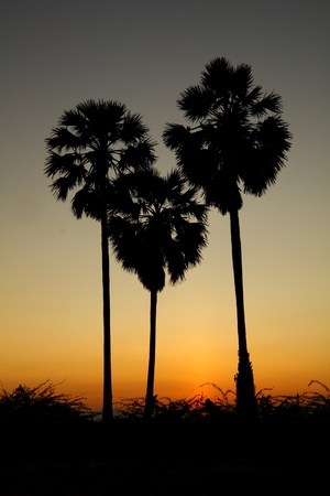 heart shape palm tree with sunset background photo