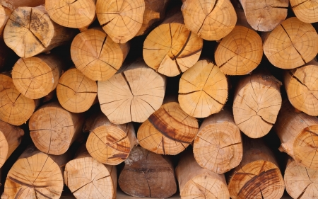 Background of  wood pile cut for fireplace  Stock Photo - 14355948