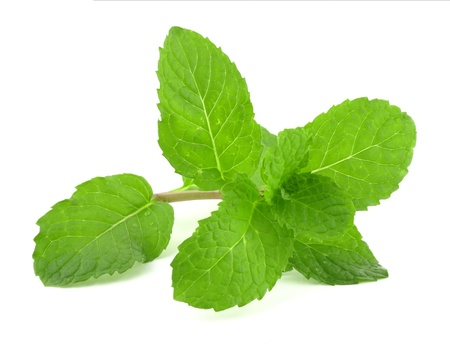 lemon balm: Fresh lemon balm on white background