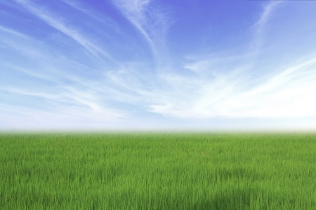bright green rice fields with nice sky photo