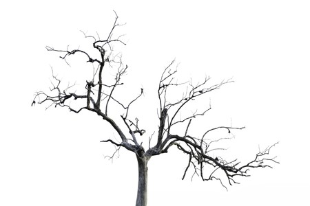 Dead tree isolated on white background Stock Photo - 24538583
