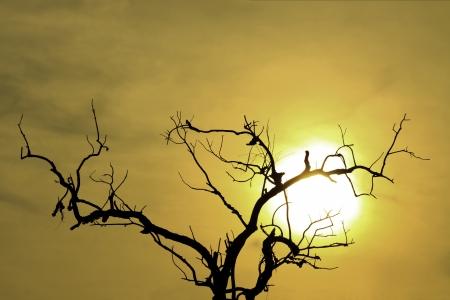 dead tree with twilight sky background ans sun Stock Photo - 24538585