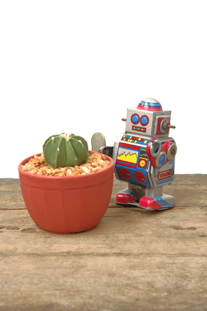 tin robot: Cactus Astrophytum in red pot with tin robot toy, vintage, retro theme on plank wooden floor on white background for insert text
