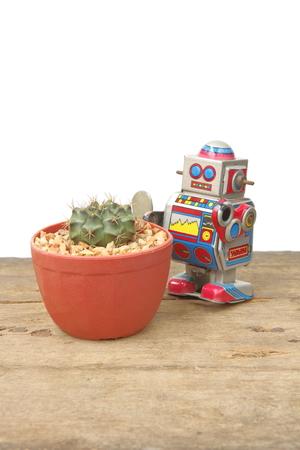 tin robot: Cactus Gymnocalycium Mihanovichi in red pot with tin robot toy, vintage, retro theme on plank wooden floor, white background for insert text Stock Photo