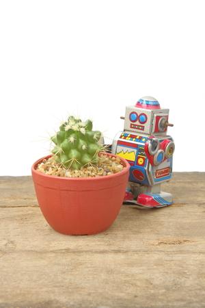 tin robot: Cactus Echnocactus Grusonii in red pot with tin robot toy, vintage, retro theme, on plank wooden floor, white background