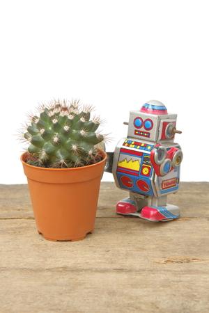 tin robot: Cactus Mammillaria in orange pot with tin robot toy, vintage, retro theme on plank wooden floor, white background Stock Photo