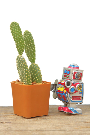 microdasys: Cactus Opuntia Microdasys in orange rectangle pot with tin robot toy, vintage, retro theme on wooden plank floor, white background