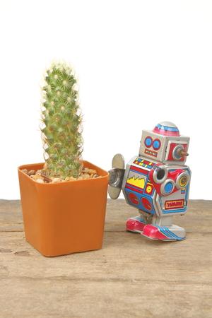 tin robot: Cactus Mammillaria Elongata in orange rectangle pot with tin robot toy, vintage, retro theme on wooden plank floor, white background Stock Photo