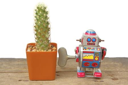 tin robot: Cactus Mammillaria Elongata in orange rectangle pot with tin robot toy beside, vintage, retro theme on wooden floor, white background