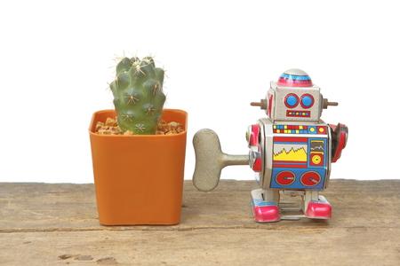 tin robot: Cactus Coryphantha Andreae in orange rectangle pot with tin robot toy companion, vintage, retro theme on wooden floor, white background Stock Photo