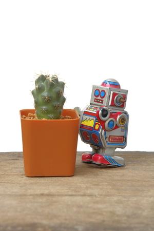 tin robot: Cactus Coryphantha Andreae in orange rectangle pot with tin robot toy, vintage, retro theme on wooden plank floor, white background