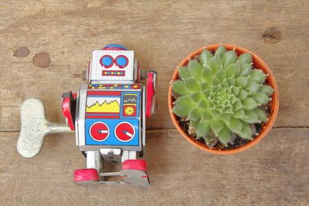 tin robot: Succulent Echeveria Setosa top view in orange pot with tin robot toy companion, vintage, retro theme on wooden floor, flat lay