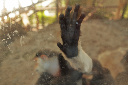 good bye: Red-shanked douc, colobine monkeys or costumed ape turned away after plastic cage, good bye concept