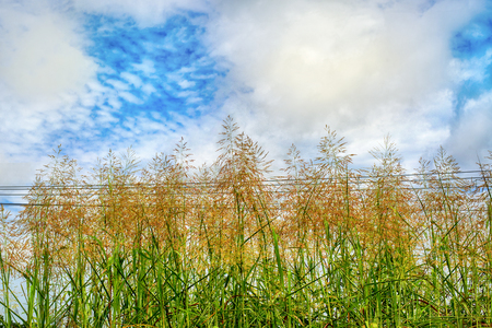 Grass top, sky, white clouds Stock Photo