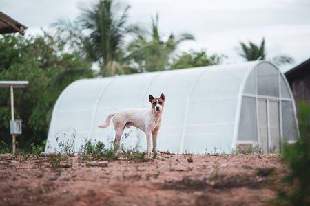 Dog pretending to be standing
