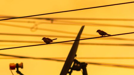 Small birds like high places, such as electric poles.