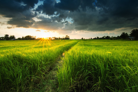 filed: landscape of farm before sunset.