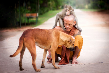 mercifulness: Buddhist monk have compassion for Dog and Monkey. Stock Photo