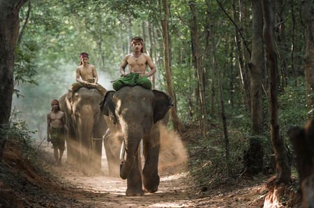 large family: Mahout shepherd Elephant in forest at Elephant Village Thailand. Conservation of Animals Asia.