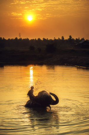 herbivore: Mahout clearing elephant Stock Photo