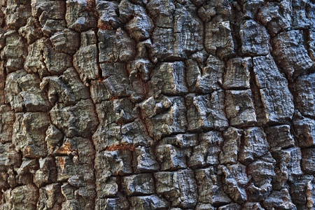 Bark of tree,tree texture photo