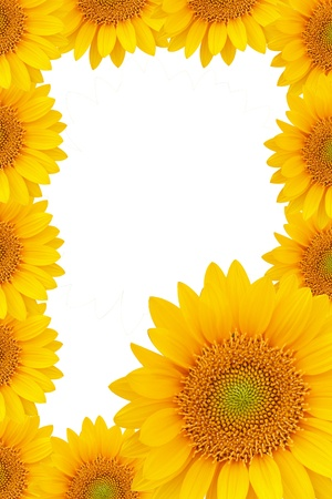 sunflower frame photo