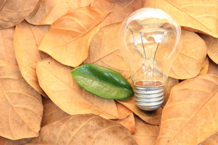 lightbulb with green leaves on dry leaf