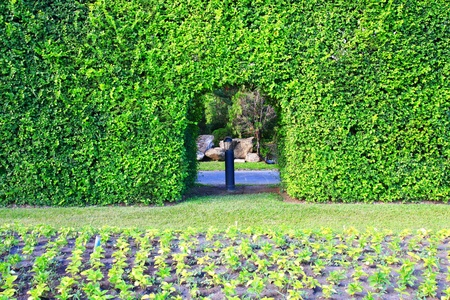 bedder: Plants in the garden  Stock Photo
