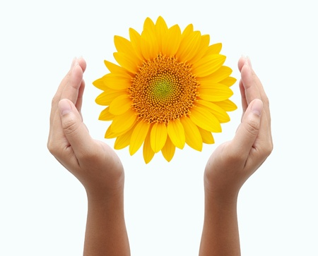 hand holding sunflower  photo