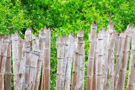 Bamboo fence photo