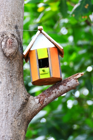 pigeon holes: Bird house hanging from the tree