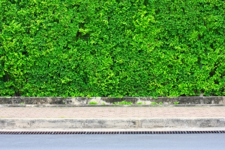 Leaf-covered wall photo